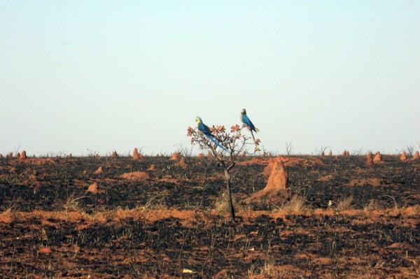 Ministério da Ciência vai monitorar desmatamento e queimadas no Cerrado | MundoGEO