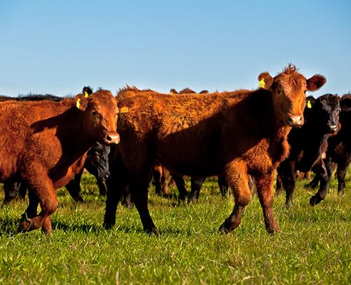 Exportação de carne tem crescimento em março | Export News