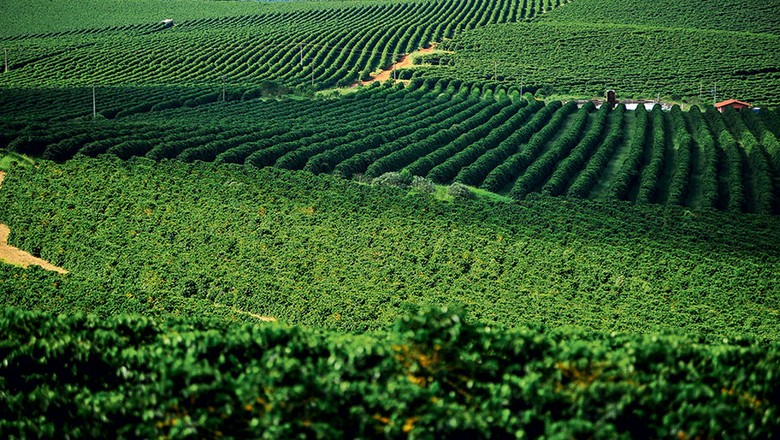 Brasil e Indonésia devem contribuir para déficit global de café | Globo Rural