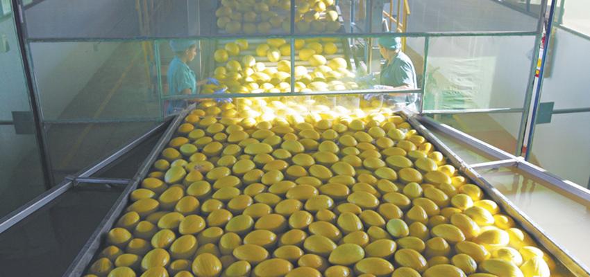 Frutas do Vale são mais exportadas por portos de Estados Vizinhos | Revista Portuária