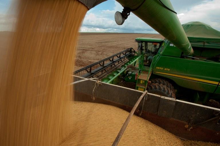 Mais da metade da safra nacional de grãos é produzida em quatro estados | Portal Brasil