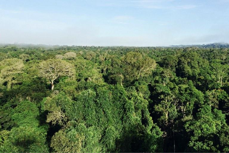 Meio Ambiente: Pesquisa mostra os impactos da seca na floresta amazônica | Portal Brasil