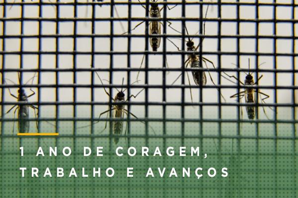 Ministério da Saúde declara fim da emergência nacional para zika | Portal Brasil