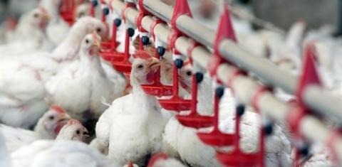 União Europeia amplia cotas de importação de açúcar e frango do Brasil | CNA Brasil