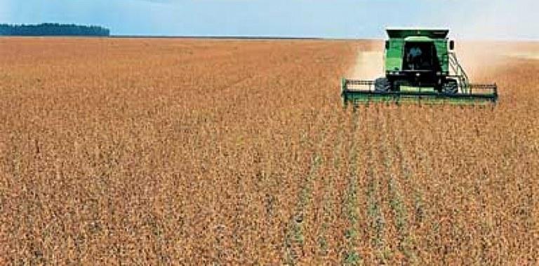 Valor bruto da agropecuária deve chegar a R$ 536 bilhões | Portal Brasil