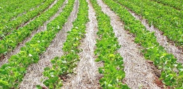 Renda do setor agropecuário é estimada em R$ 535,9 bilhões | CNA Brasil