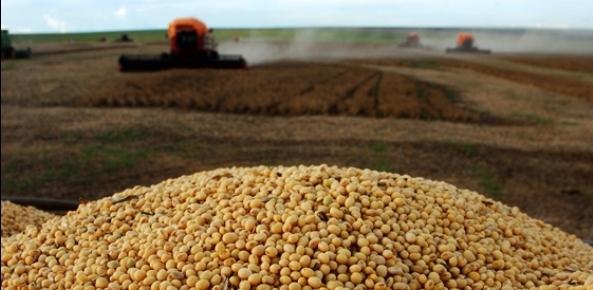Soja: Mercado em leve queda, no aguardo de noticias de clima e condições das lavouras | CNA Brasil