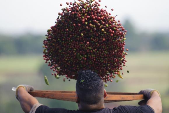 Exportações de café chegam a 113 países em 2017 | Portal Brasil