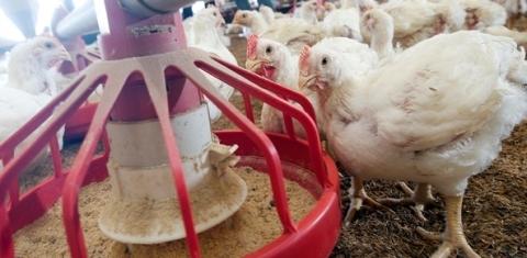 Desempenho externo das carnes na 2ª semana de agosto | CNA Brasil