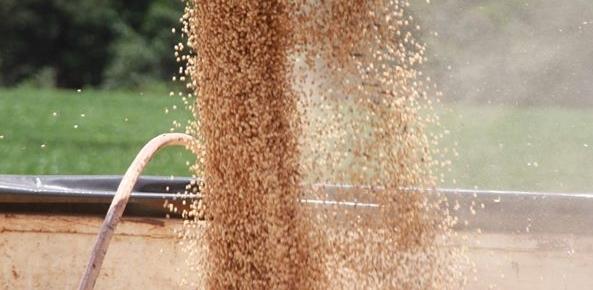 Preço da soja cai mais de 5% no Brasil | CNA Brasil