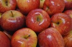 Brasil vai exportar maçã fresca para a Índia | Portal Brasil