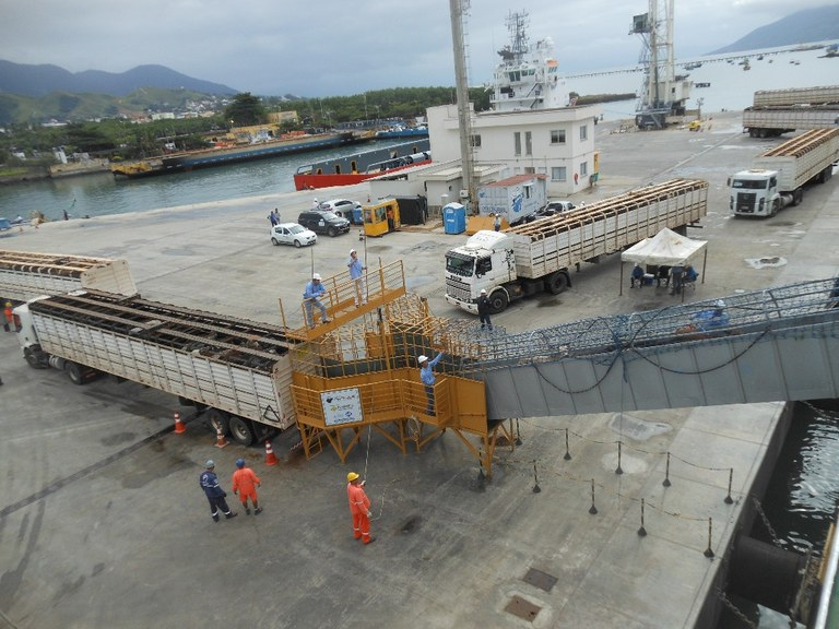 Mapa incentiva debate sobre boas práticas de transporte marítimo de bovinos | Ministério da Agricultura, Pecuária e Abastecimento