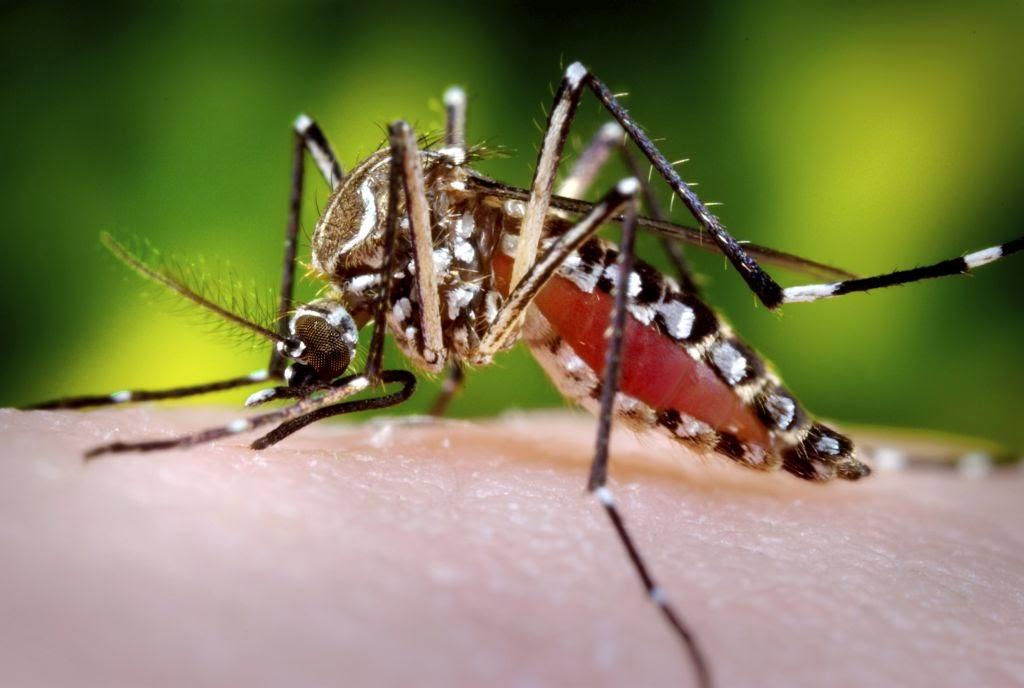 Fernando de Noronha intensifica prevenção contra o Aedes aegypti | Governo de Pernambuco