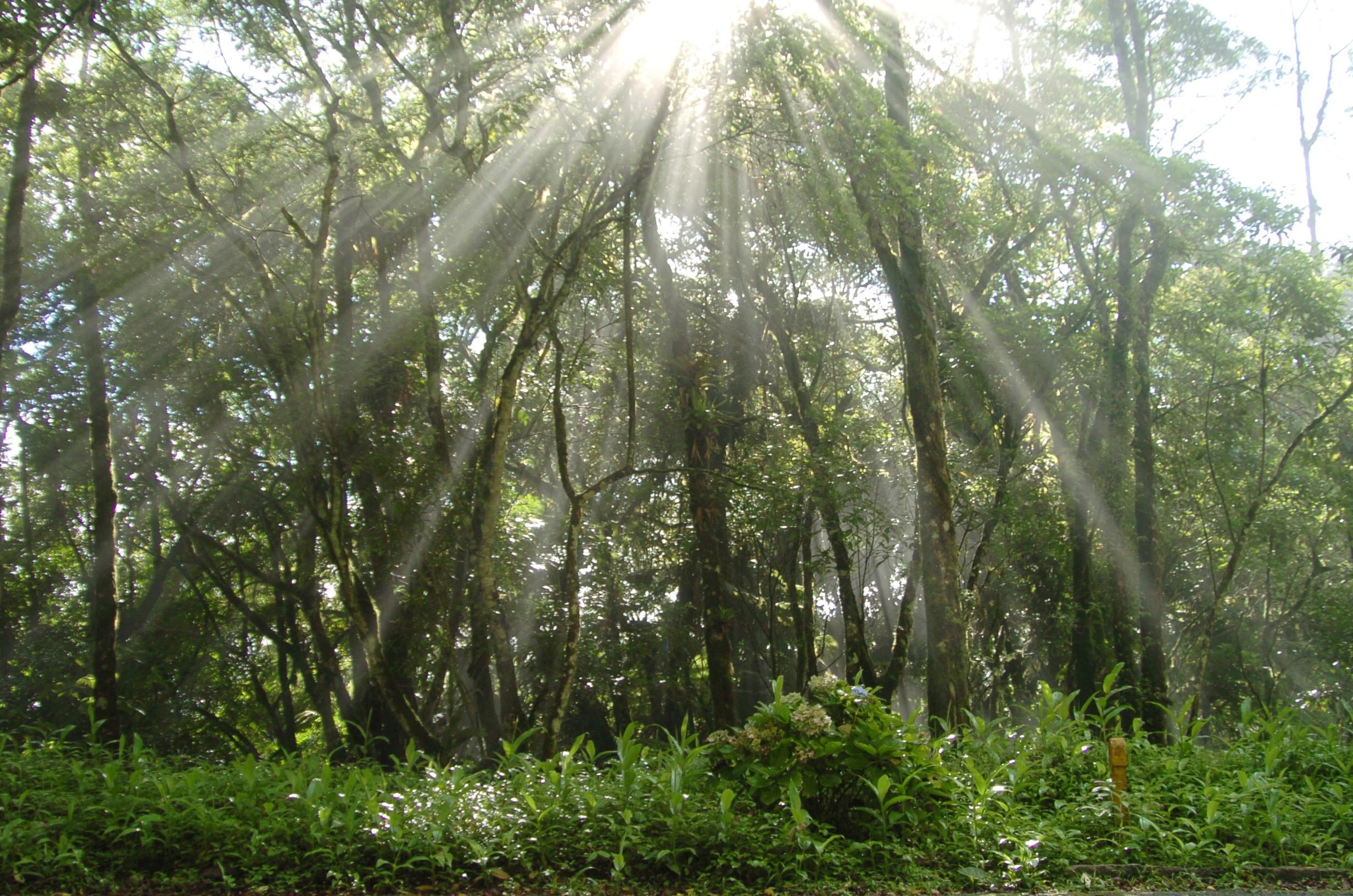 Brasil apresenta ações para recuperar biomas | Ministério do Meio Ambiente